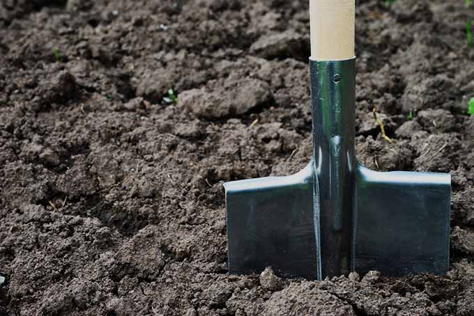 A close up of a garden shovel in the dirt.