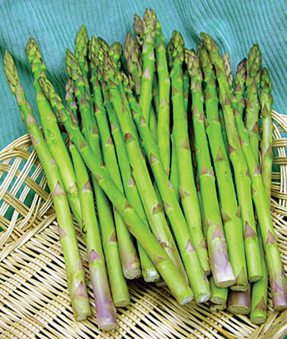 Cut Jersey Giant Asparagus stalks