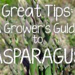 Tips for Growing Asparagus | Gardenerspath.com