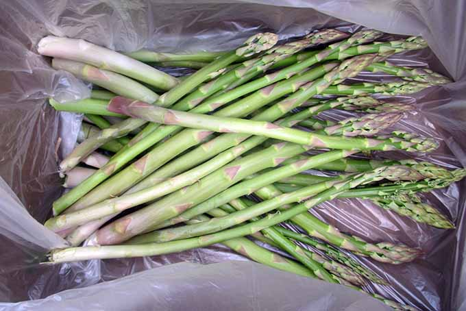 Box of Picked Asparagus Spears | GardenersPath.com