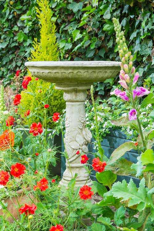 A vertical picture of a stone pedestal with a bowl on the top, set in amongst red flowers and purple foxgloves, with ivy in the background.