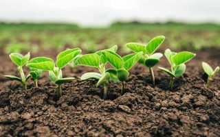 Plant Nutrients: What They Need and When They Need It