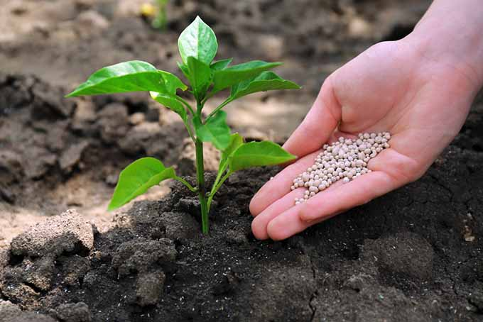Plant Nutrients What They Need And When It Gardener S