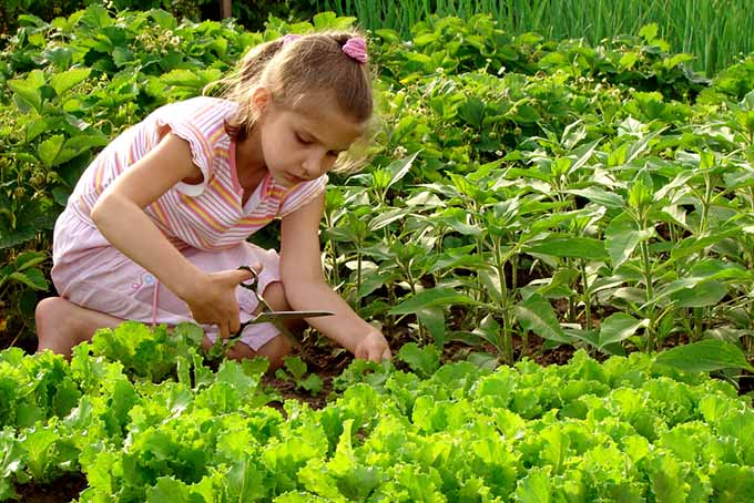 Go-To Gardening with children Guide| GardenersPath.com
