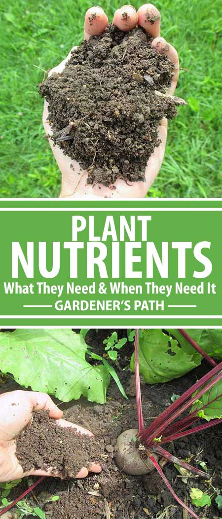 Did you know that appearance, disease, growth stage, and more reveal what nutrients plants need? Like us, plants need a wide range of nutrients, and they can gain them from many sources. Learn how to master plant nutrients, diagnose deficiencies, and restore balance here at Gardener's Path!