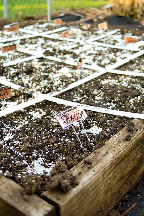 Close up of a bare square goot garden in a raised bed where seeds have been planted but have not yet sprouted.