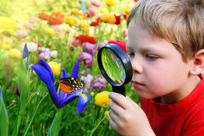 Beneficial Insects Boy with Magnifying Glass and Butterfly | GardenersPath.com