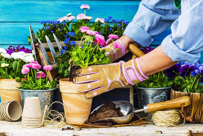 Gloved Hand Repotting Flowers | GardenersPath.com