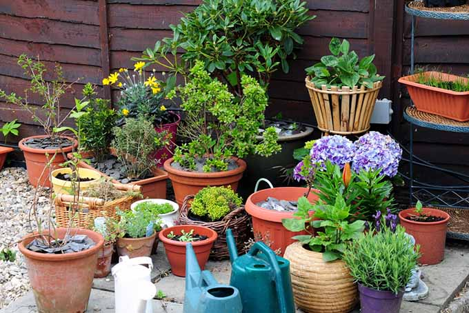 how to choose the right size pot for your plant