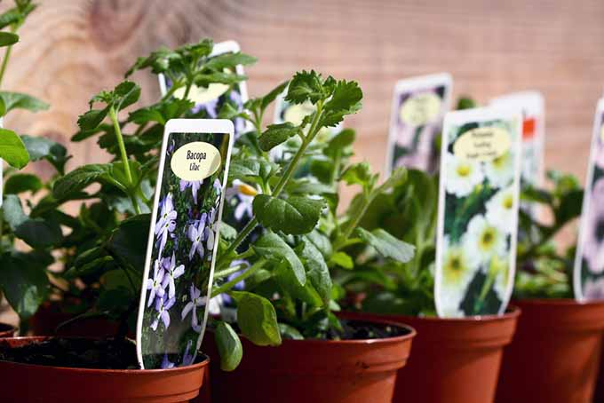 Gardening with Children Potted Herbs | GardenersPath.com