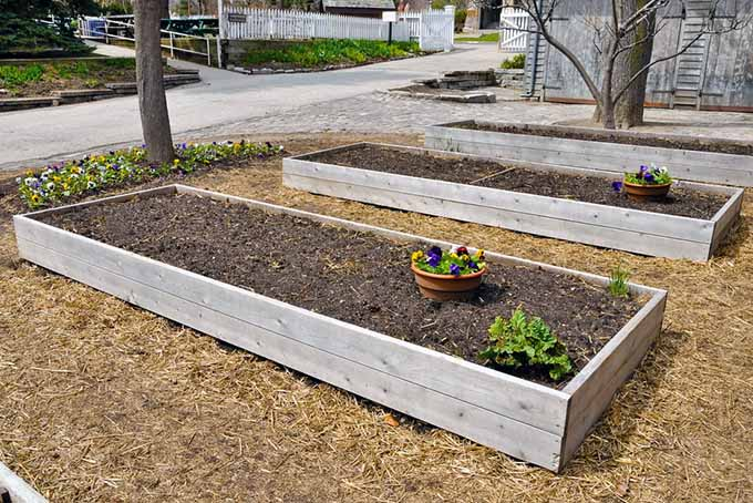 Rasied beds with dark black earth and compost.