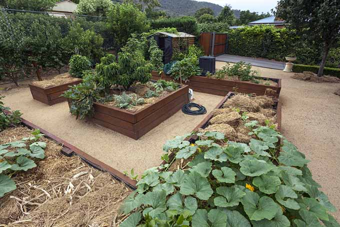 A nicely designed backyard featuring a landscaped raised bed set up with gravel pathways and veggies with straw mulch.