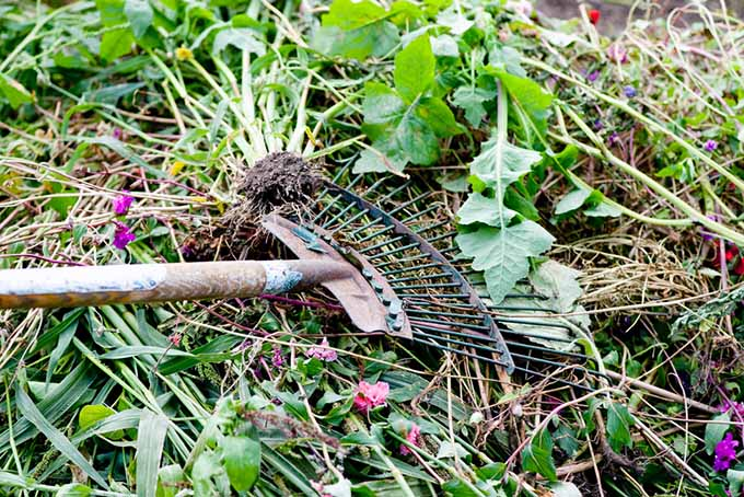 Gardening with Children Raking the Yard | GardenersPath.com