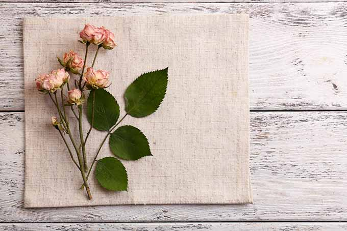 Gardening with Children Rose and Linen | GardenersPath.com