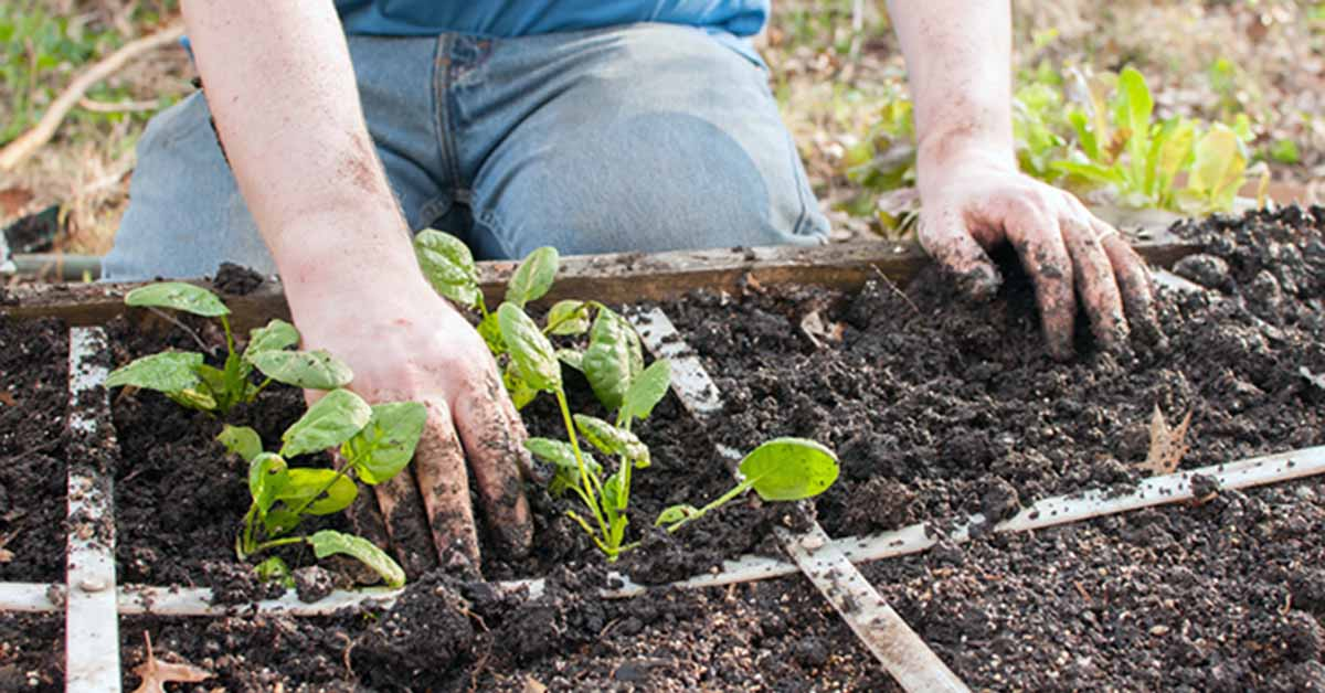 Your Ultimate Guide to Square Foot Gardening | Gardener's Path