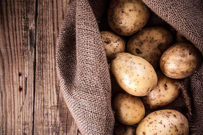 Storing Potatoes | GardenersPath.com