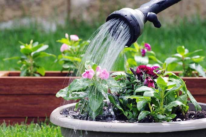 Watering a Container Garden | GardenersPath.com