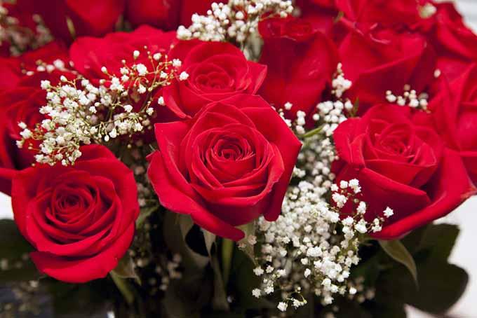 Roses in Floral Arrangement | GardenersPath.com