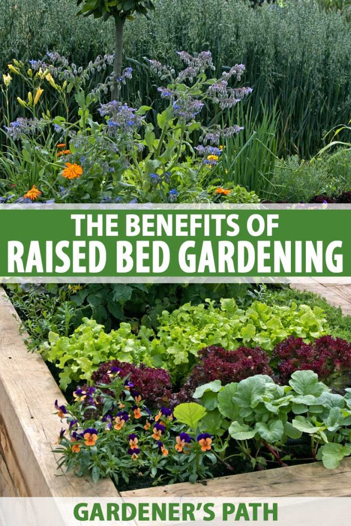 A raised bed made out of wood with a mature vegetable patch.