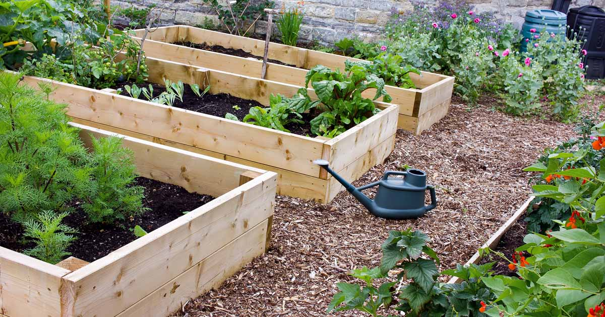 Raised Bed Gardening Benefits: What do they actually do? | GP