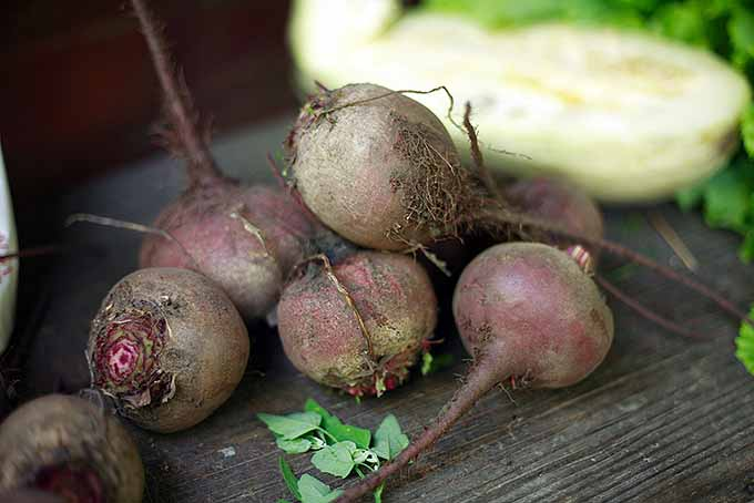 Homegrown Beets for Health | GardenersPath.com
