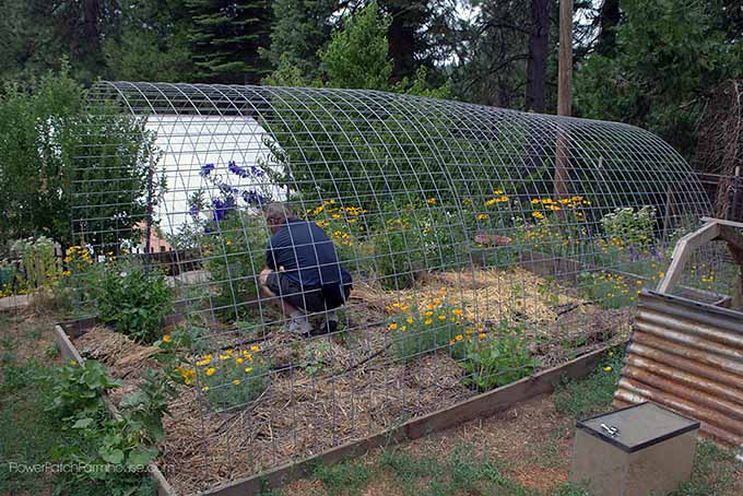 10 of the Best DIY Greenhouses & Cold Frames | Gardener's Path Raised Bed Hoop House Plans on pvc hoop greenhouse plans, raised beds from found materials, raised garden hoop, printable greenhouse plans, raised garden beds designs, garden bed plans, raised bed building plans, simple greenhouse plans, raised bed planting plans, raised bed planter box plans, raised bed greenhouse plans, raised bed gardening plans,