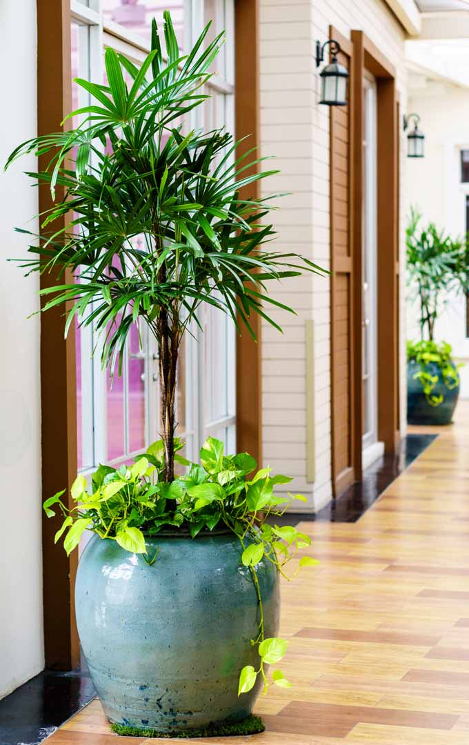 Do you want to purify the air in your home, while keeping the pets and little ones safe? Learn how with these nontoxic houseplants: https://gardenerspath.com/how-to/indoor-gardening/nontoxic-houseplants/