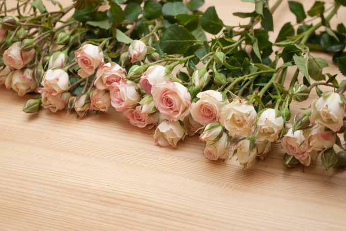 Easy Romantic Blooming Heart Centerpiece | GardenersPath.com