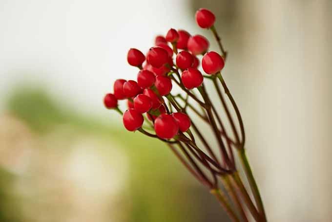 Amazing Romantic Blooming Heart Centerpiece | GardenersPath.com