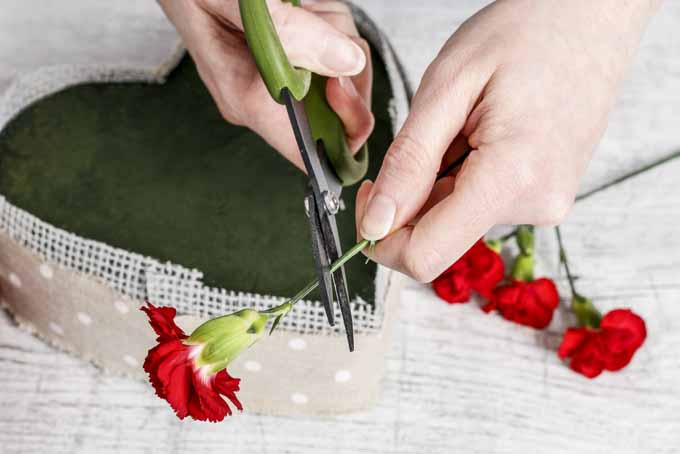 An Easy Guide on Creating Romantic Blooming Heart Centerpiece | GardenersPath.com
