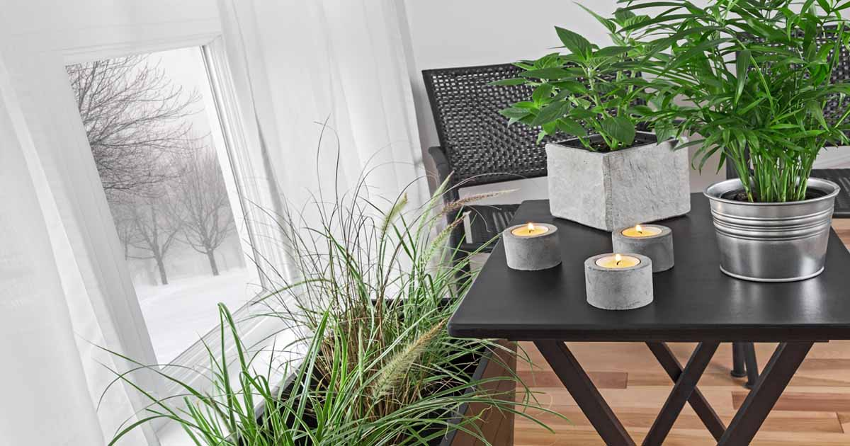 Add These 5 Nontoxic Houseplants To Your Home Decor Gardener S Path