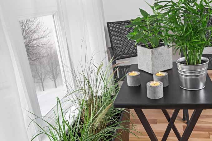 A horizontal image of a corner of an apartment with a black table and a window to the left of the frame with a selection of nontoxic houseplants.