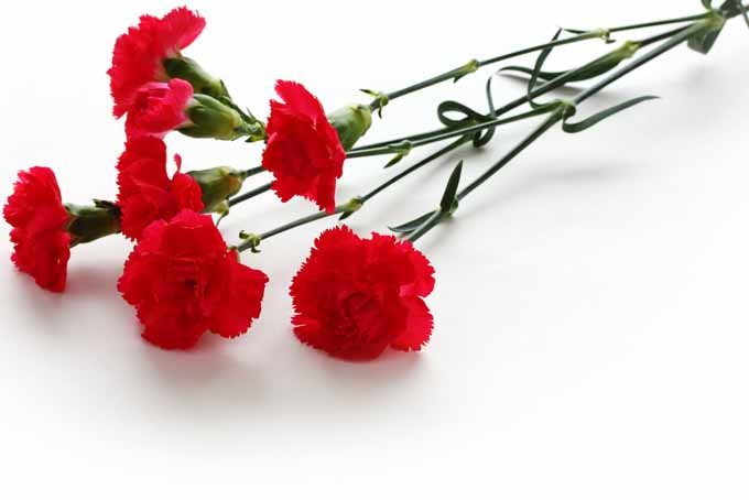 The Best Romantic Blooming Heart Centerpiece | GardenersPath.com