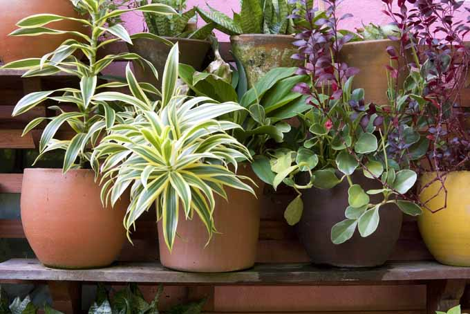 The Best Nontoxic Houseplants to Purify the Air and Beautify Your Home | GardenersPath.com