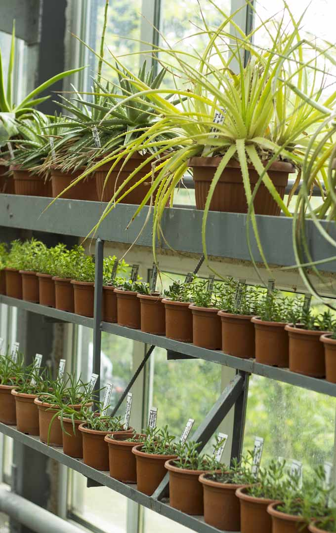 Do you want to make your home more fresh and vibrant? Learn the secrets here: https://gardenerspath.com/how-to/indoor-gardening/nontoxic-houseplants/
