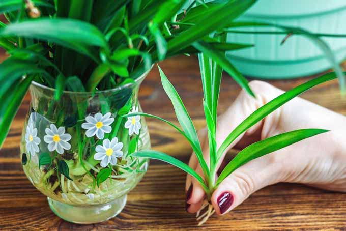 Add These 5 Nontoxic Houseplants To Your Home | GardenersPath.com
