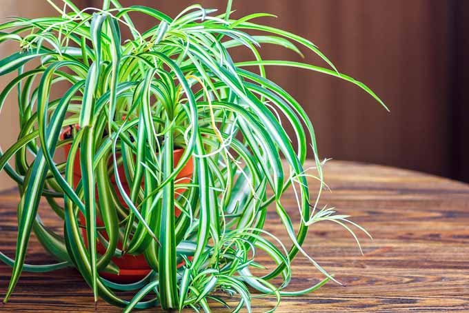 5 Nontoxic Houseplants To Add To Your Home Décor Immediately | GardenersPath.com
