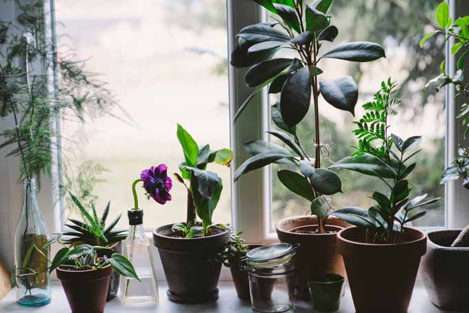A horizontal image of a windowsill with a variety of potted houseplants.