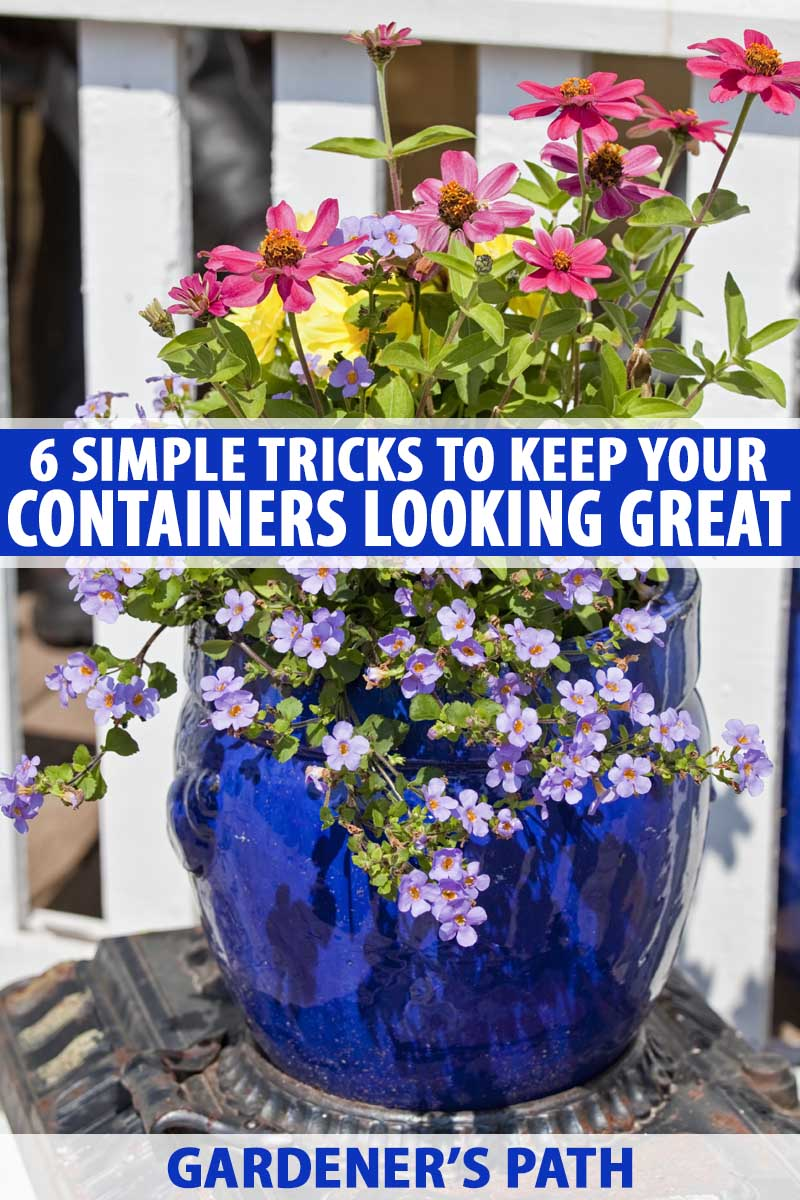 6 Simple Tricks For Beautiful Garden Containers Gardener S Path