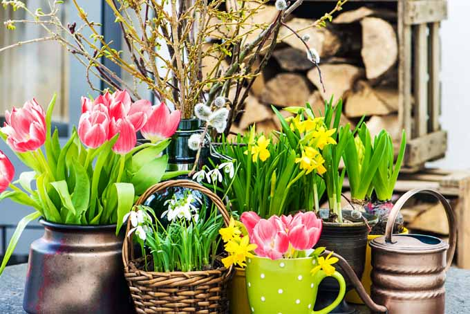 How To Force Spring Blossoms Indoors | GardenersPath.com