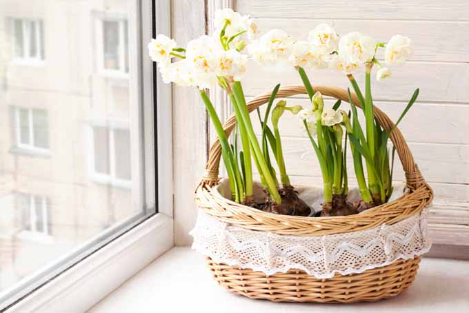 Force Spring Blossoms Indoors When It's Still Cold | GardenersPath.com
