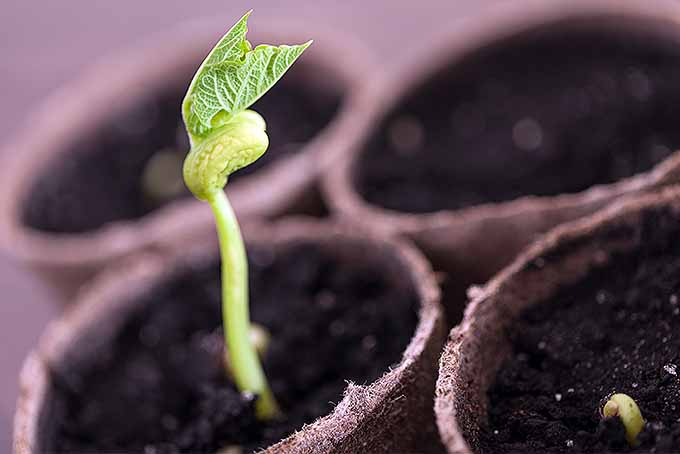 Start annuals indoors with these tips, then transplant seedlings to your garden. | Gardenerspath.com