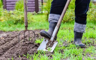 Dig in to our springtime gardening checklist. | Gardenerspath.com