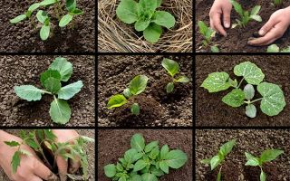 Get started in the veggie patch with these tips. | Gardenerspath.com