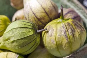 How to Grow and Harvest Tomatillos