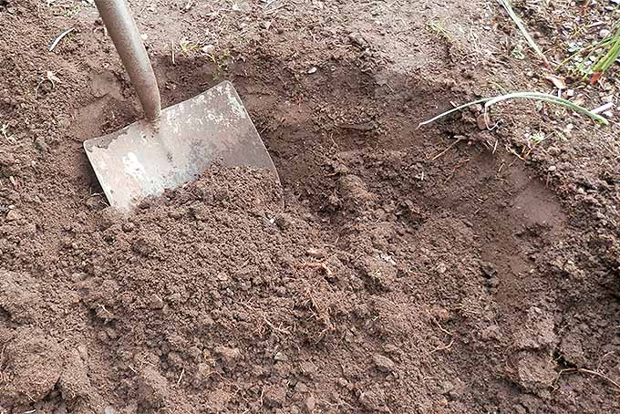 A gardening shovel in a hole partially filled with brown, dry, loose dirt.