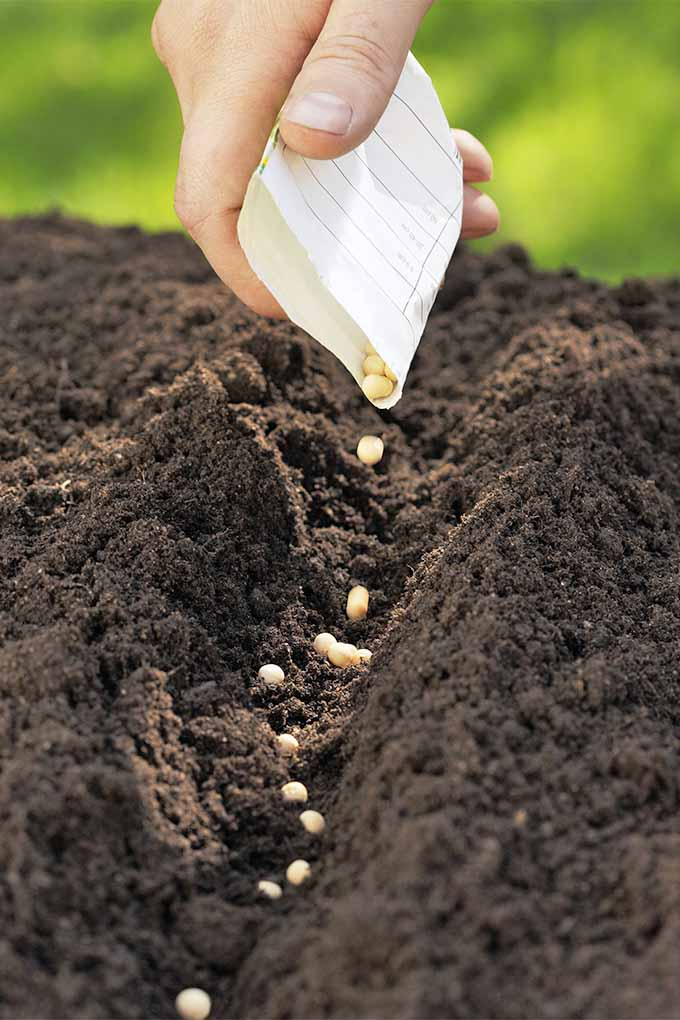 Ready to plant your first vegetable garden? Time to get those seeds started! Read more now or Pin It for later: https://gardenerspath.com/how-to/beginners/first-vegetable-garden/