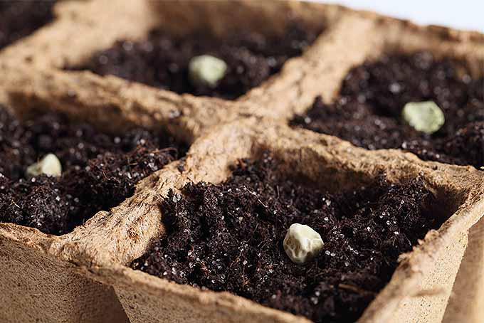 Start annual seeds indoors with a DIY seed starting planter. | Gardenerspath.com