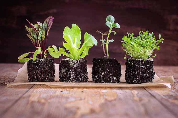 Plant microgreens and lettuces early in the season for salads all summer long.   Gardenerspath.com