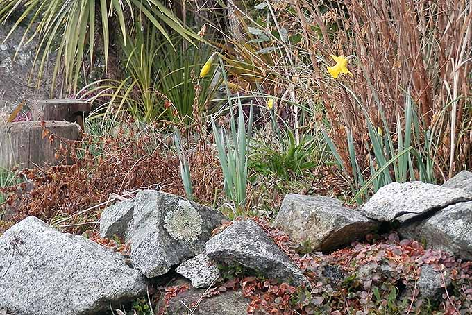 Repair rockeries in the springtime. | Gardenerspath.com
